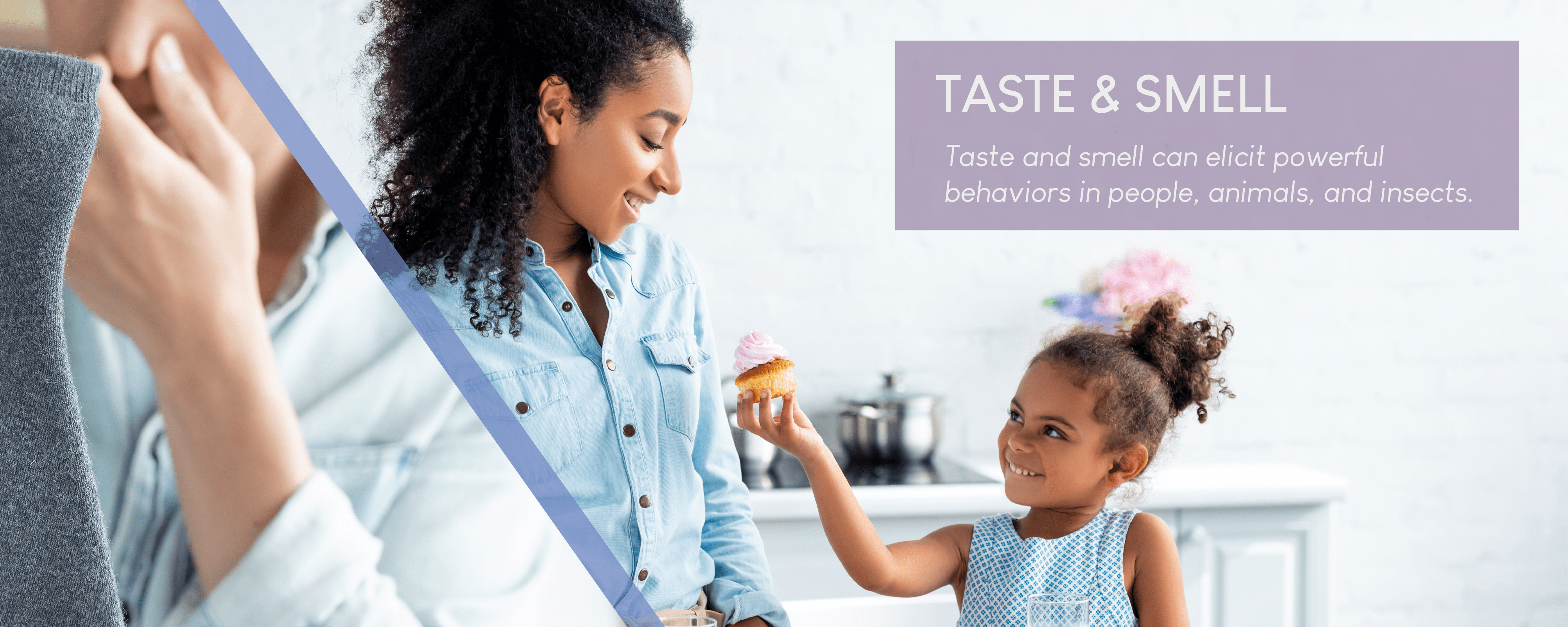Taste and smell can elicit powerful behaviors in people, animals, and insects.